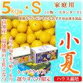 土佐小夏(高知県産)・家庭用(上物・スタンダード)・大箱(約5kg)・Sサイズ【送料無料】