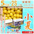 土佐小夏(高知県産)・家庭用(上物・スタンダード)・大箱(約5kg)・SSサイズ