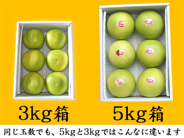 水晶文旦(すいしょうぶんたん)・5kg箱と3kg箱の比較