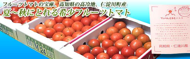 (夏~秋)の高知県産フルーツトマト・てっぺん・トマト・2キロ箱