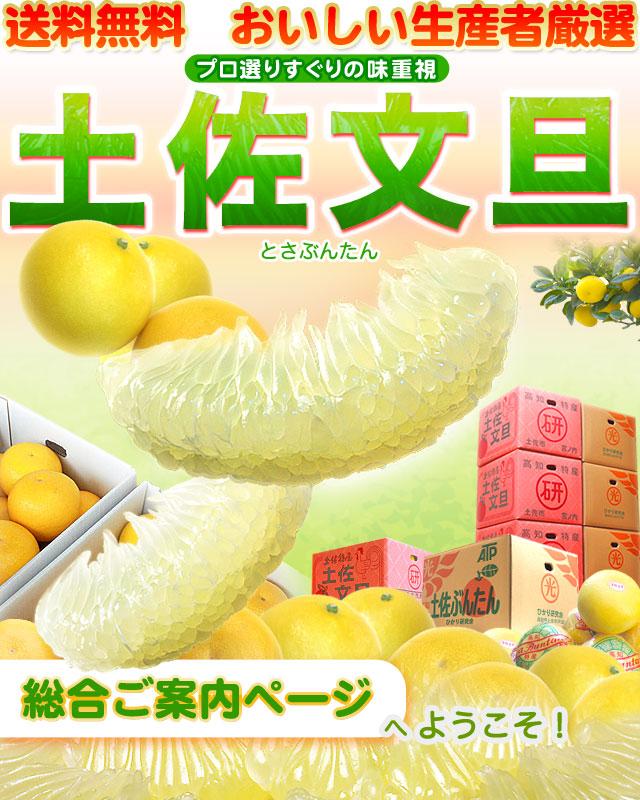 土佐文旦・特集ページ・トップ
