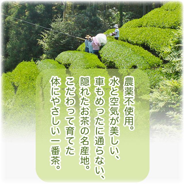 農薬不使用。水と空気が美しい、車もめったに通らない、名産地の一番茶。