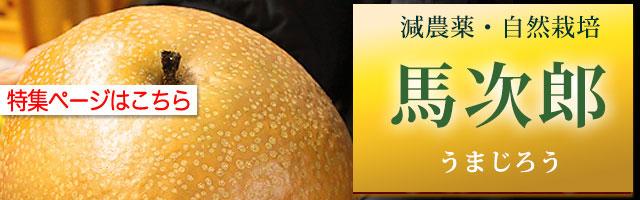 馬次郎(うまじろう)梨