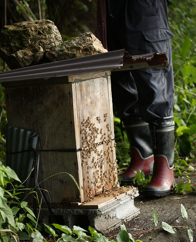 日本蜜蜂の巣箱(全体画像)