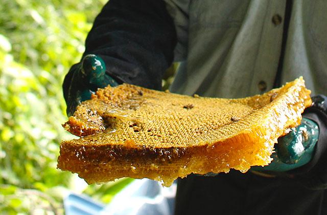 100%日本蜜蜂の蜂蜜です
