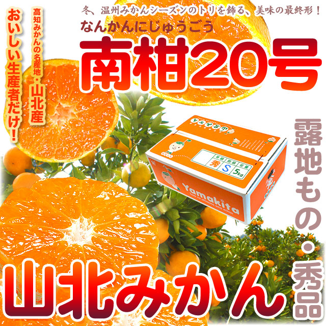 山北みかん・南柑20号