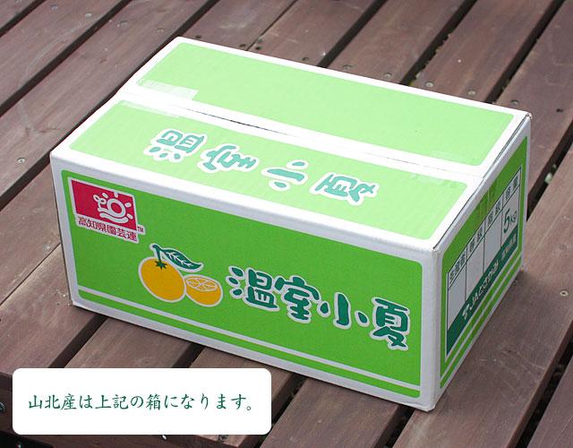山北産の小夏・化粧箱ではなく、みかん箱になります。