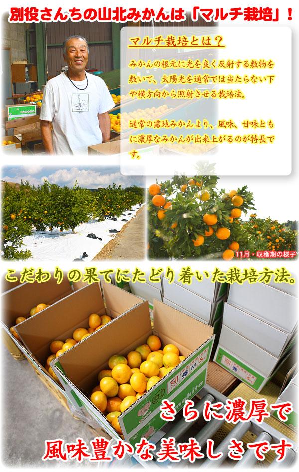 こだわりの果てにたどり着いた栽培方法「マルチ」