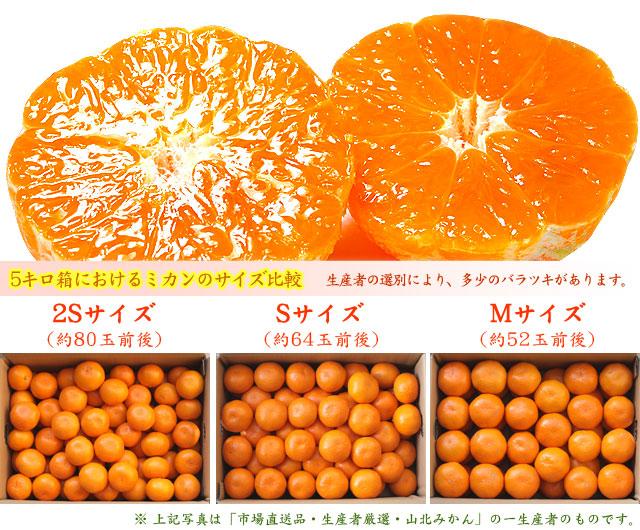山北みかん・5kg箱におけるサイズ比較(2S、S、Mの場合)