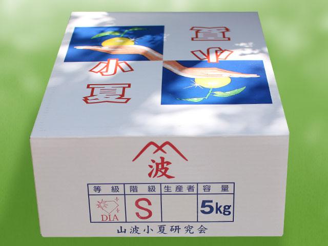 山波・ダイヤ・5kgの外箱