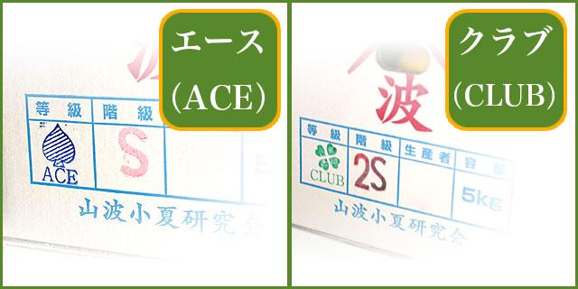 山波・エース(ACE)とクラブ(CLUB)